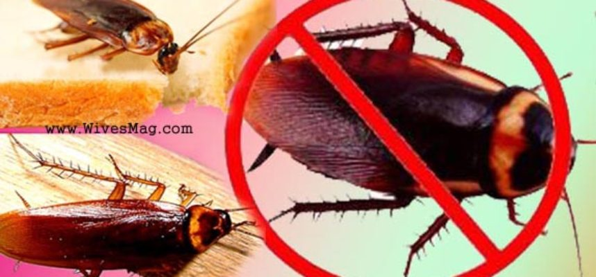 keep Cockroaches away from home