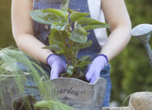 Top 10 Tools For Maintaining Your Garden